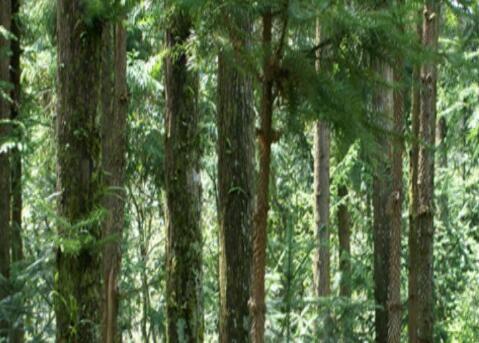 2018年生态公益林每年每亩补贴标准是怎样的?(附林业补贴标准)