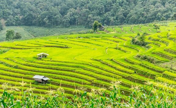 国家支持绿色高效特色农业项目,补助资金不低于1800万,快看你符合条件吗?