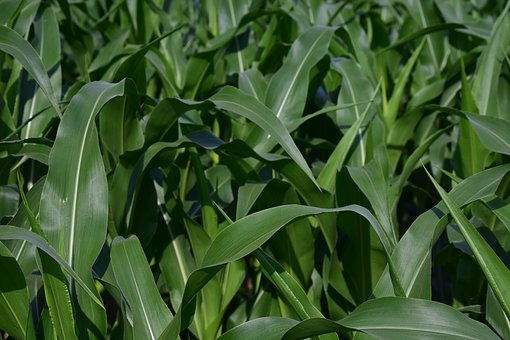 免耕是什么?有哪些好处?玉米免耕的补助政策是什么?