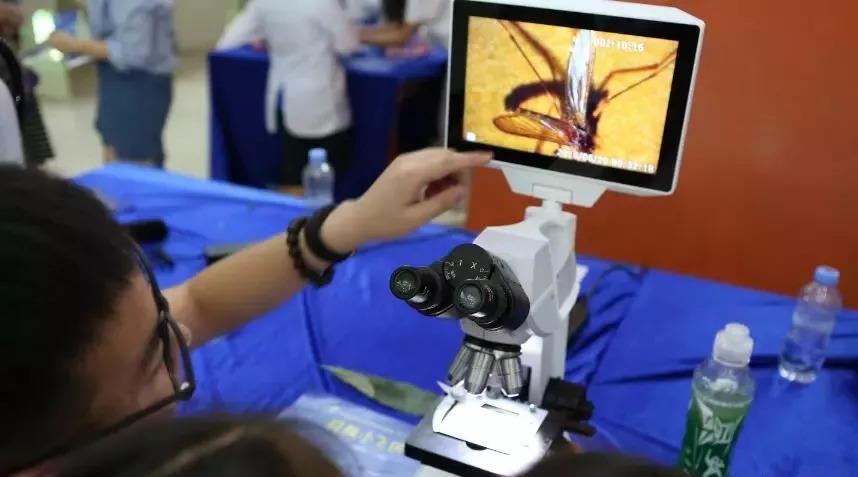 亲子研学:广州首届生态昆虫艺术展