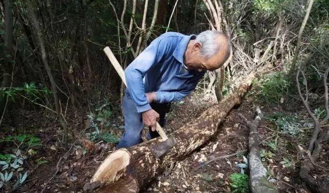 """农旅融合规划项目:""""香菇寻祖""""主题乡村旅游线路"""