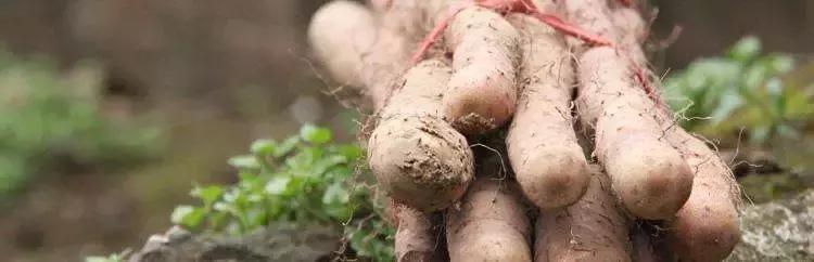 2019农业农产品新营销之短视频营销