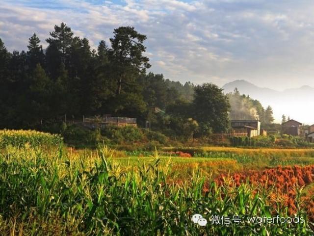 生态农业旅游概念性规划——以响堂村为例
