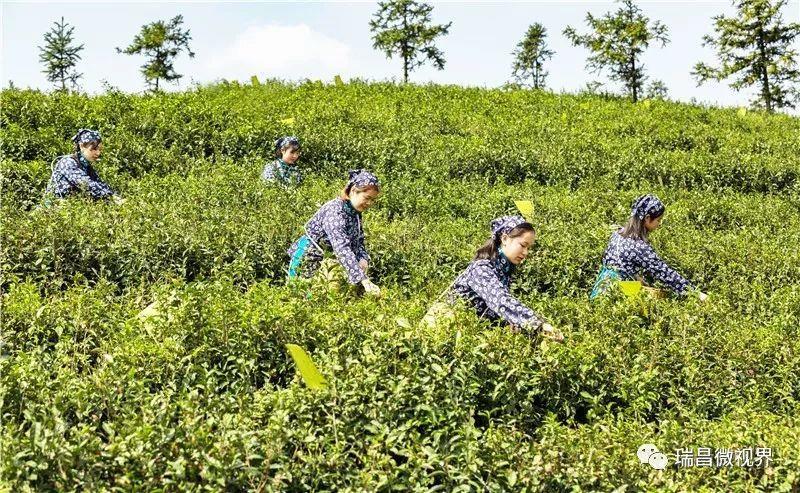 """江西九江市瑞昌:农业综合开发助推""""秀美乡村""""升级的项目建设经验"""