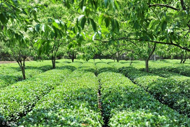 农业种植,套种有讲究,收入翻倍,分享12种农业种植的技巧