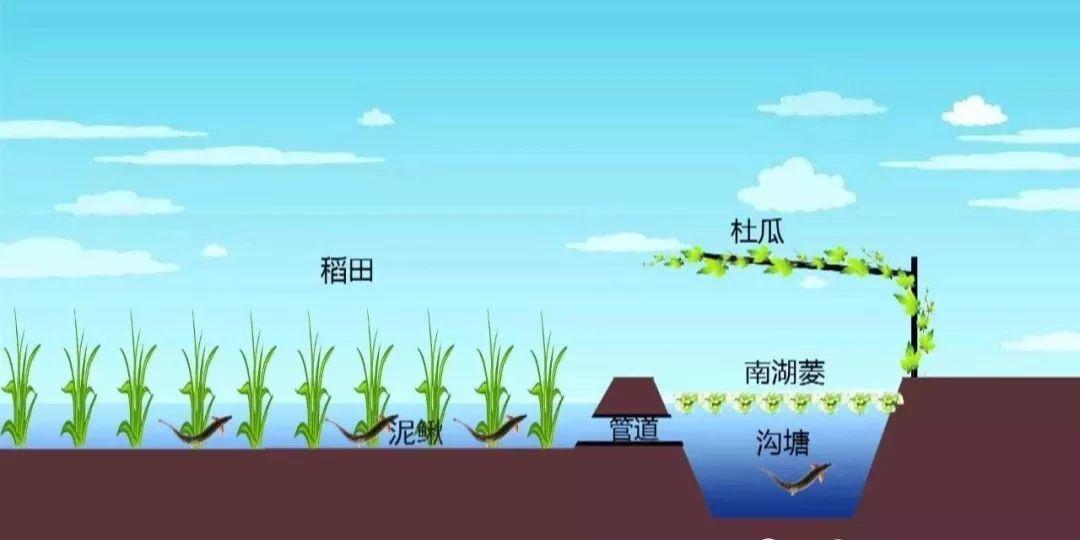 互联网+现代农业创业故事:每公斤50元大米还供不应求
