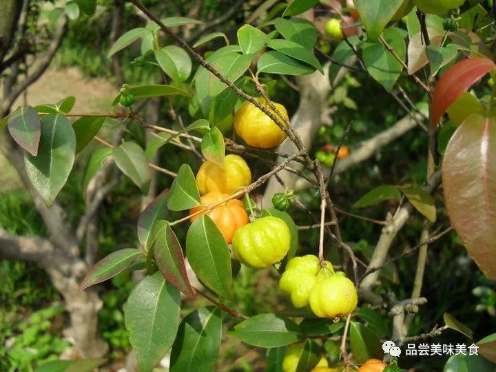 农村常见的5种野果,你吃过几种?