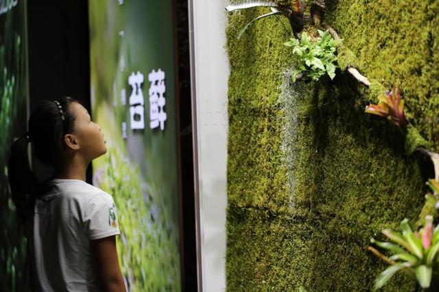 省内首次苔藓科普大展登陆浙江自然博物馆
