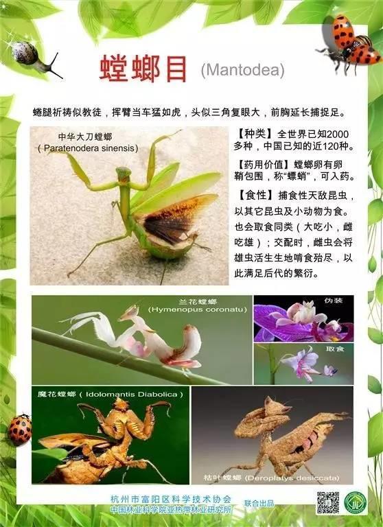 科普图展 | 奇妙的昆虫世界(原创)