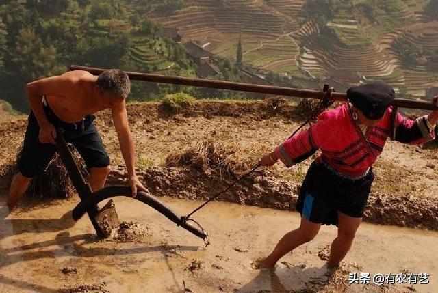 为什么说中国小农现状很难改变?现代农业道路还久远?