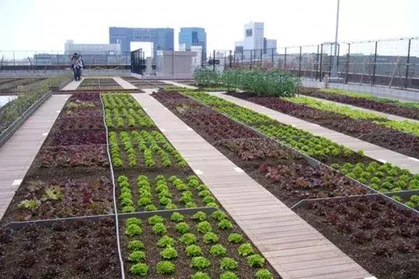 """城郊是农业发展的""""黄金区""""!一些人已经靠这些富起来了"""