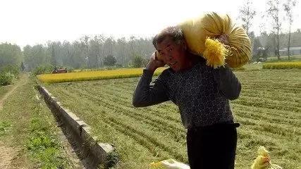 农业老龄化之后,明天的地谁来种?