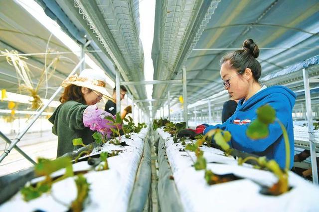 一个农产品基地的智慧农业普适样板(附2条建议)