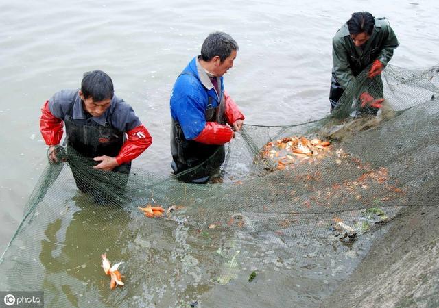 广西政策:推进广西水产养殖业绿色发展的实施意见