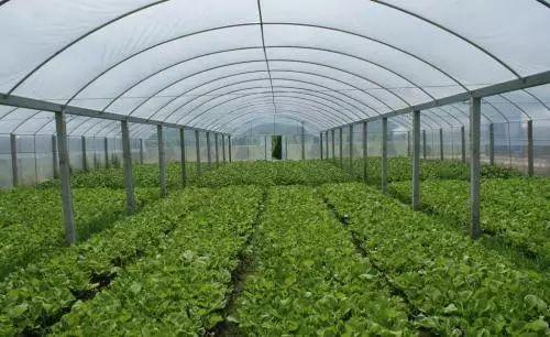 品牌农业的农产品是如何一步步做大的?