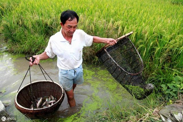 关于加快推进广西水产养殖业绿色发展的实施意见(桂农厅发〔2019〕128号)