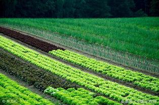 《乡村振兴:选择与实践》| 生态农业是关键