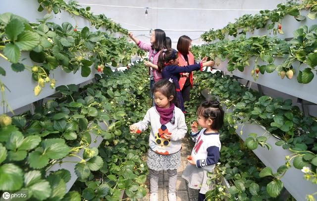 做农业要学会的扶持项目补贴渠道有哪些