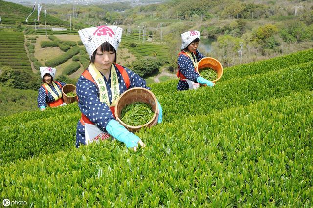 """听说总有人想从日本""""偷点""""产品回来,为什么?日本农业有啥诱惑"""