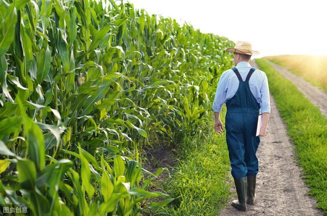 有机农业:没有巨头,行业还处在红利期