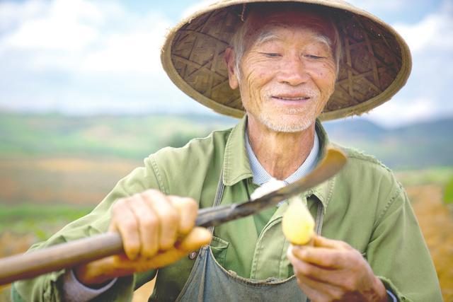 """""""拼""""出新产业,贫困户共享农产品全链路收益 拼多多探索中国农业新路径"""