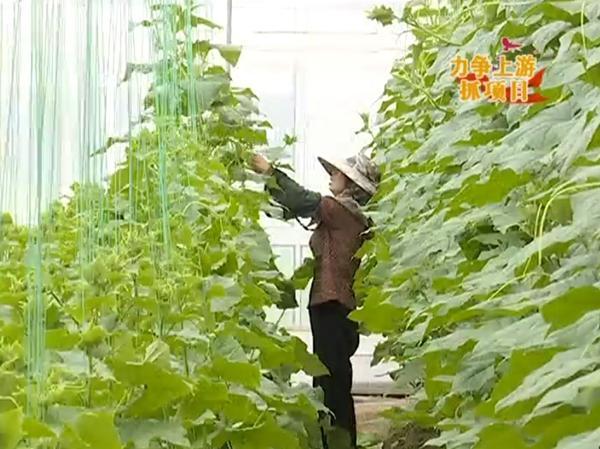 江苏翰雅生态农业:构建现代规模农业结构 实施农业   文旅融合发展