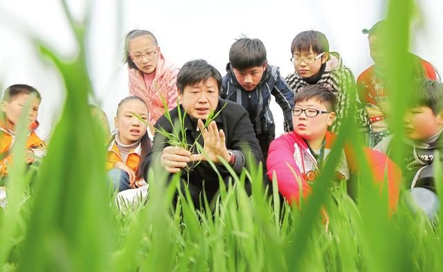 农村庄稼常见六种害虫,易出现在哪些作物上如何防治,你知道吗