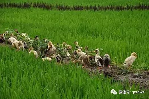 终于找到了!有机农业的五大死因