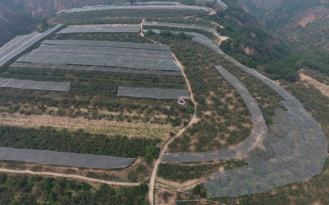 延安卓家村果农心声:种苹果为什么越来越不赚钱了