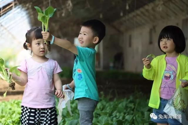 暑假去哪儿(二)丨生态农业篇