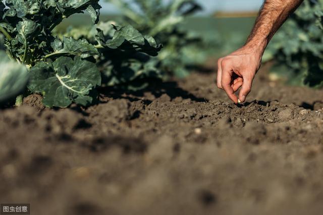 现在的农村,种地的农民越来越少,以后的农业该如何发展呢?