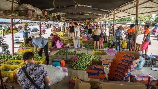 田东芒果文化活动月火热开启,七月来田东就对了