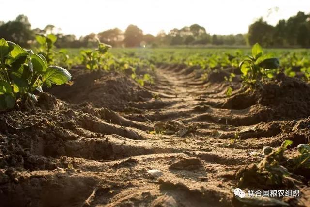 农业科普 | 你是否知道,土壤是不可再生资源?