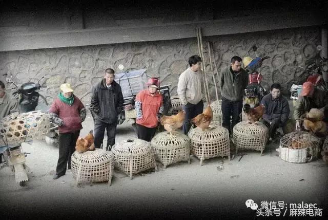 农家的土鸡,放到网上来卖,为何这么难?