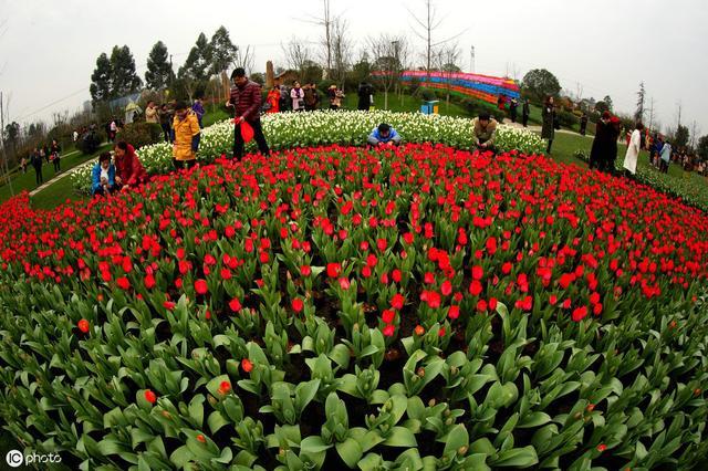 台湾休闲农业发展30年,策略联盟方式架构带状休闲农业园区