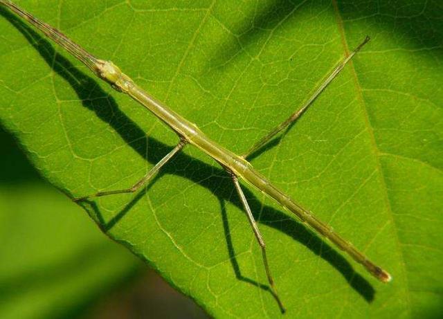 农村这9种奇怪的昆虫,有的是玩具,有的是童年阴影!你认得几种