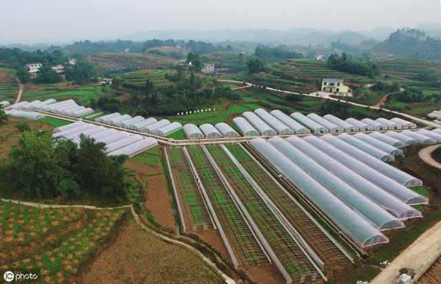 """做现代农业需要了解""""八大坑"""",才能避免投资失败"""