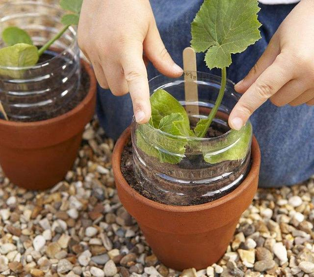 矿泉水瓶养花好宝贝,扦插、生根、种蔬菜都有用,方便又实用