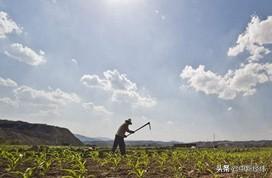 农业农村部拟对工商企业等社会资本流转土地经营权进行规定