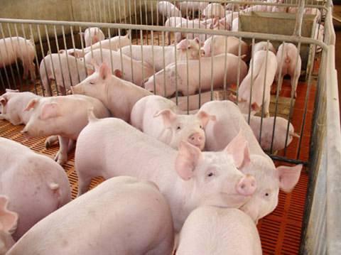 自然资源部最新通知:生猪养殖不需要办理建设用地审批,不需要耕地占补平衡