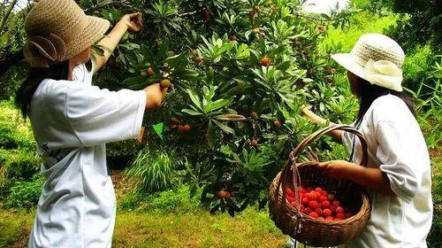 共享农业如何搞?看这10个真实案例