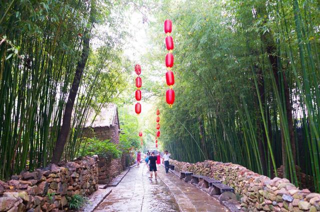 山东这个村子很特别,家家户户生活在竹林里,如今成网红景点