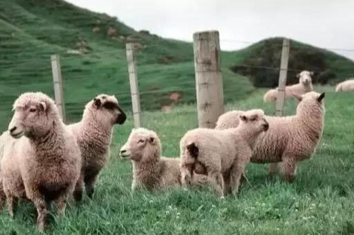 不知道亲子研学农场怎么搞?私藏的6家成功案例都在这里