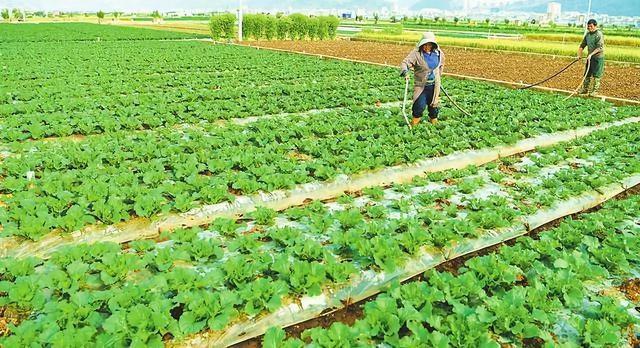 我国农产品价值链面临4大挑战;种植、畜牧业跟不上农业发展