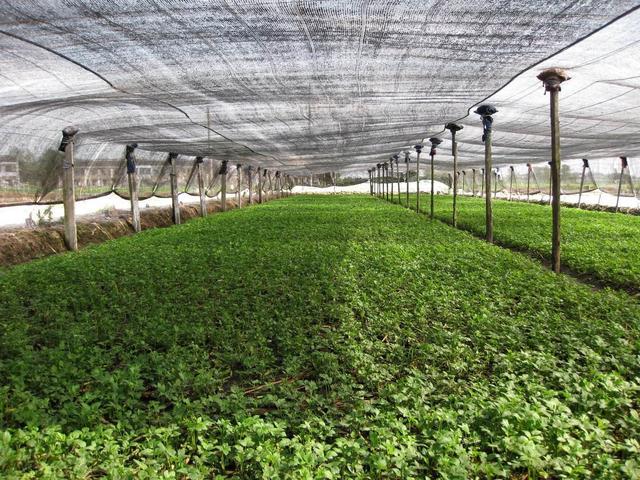 13000万个合作社,年产值1650亿,法国的休闲农业为何能这么成功?