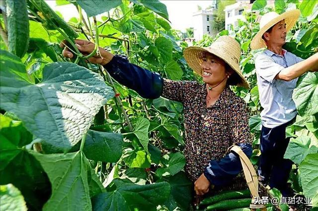 纵使农业现状遍布荆棘,依然是今天与未来最有机会的行业