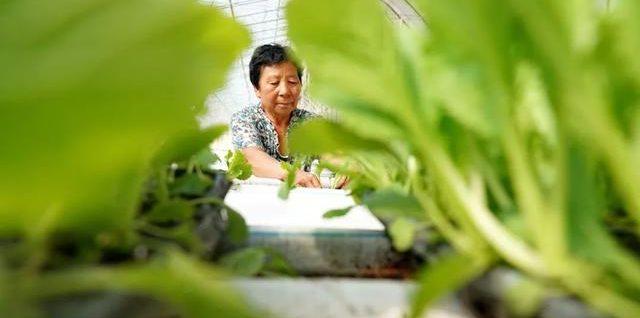 农业农村部公布第一批家庭农场典型案例名单:全国家庭农场要向榜单上的榜样看齐,种植、养殖共性经验可复制