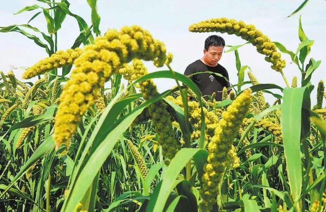 朝日绿源农场失败大解密,循环农业模式很棒,但关键还得靠这2点