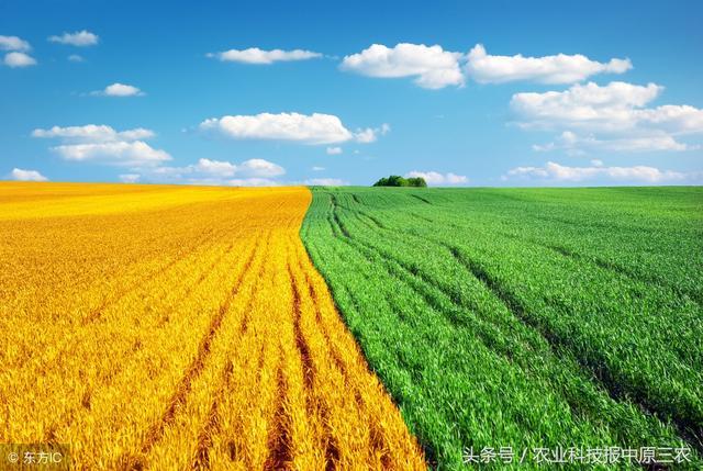 好消息:设施农业2020年后有望迎来大规模补贴
