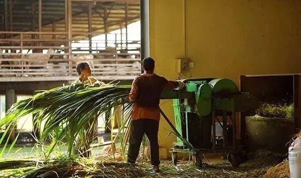 嫁接自然教育,100亩小牧场,蝶变为国际网红打卡地